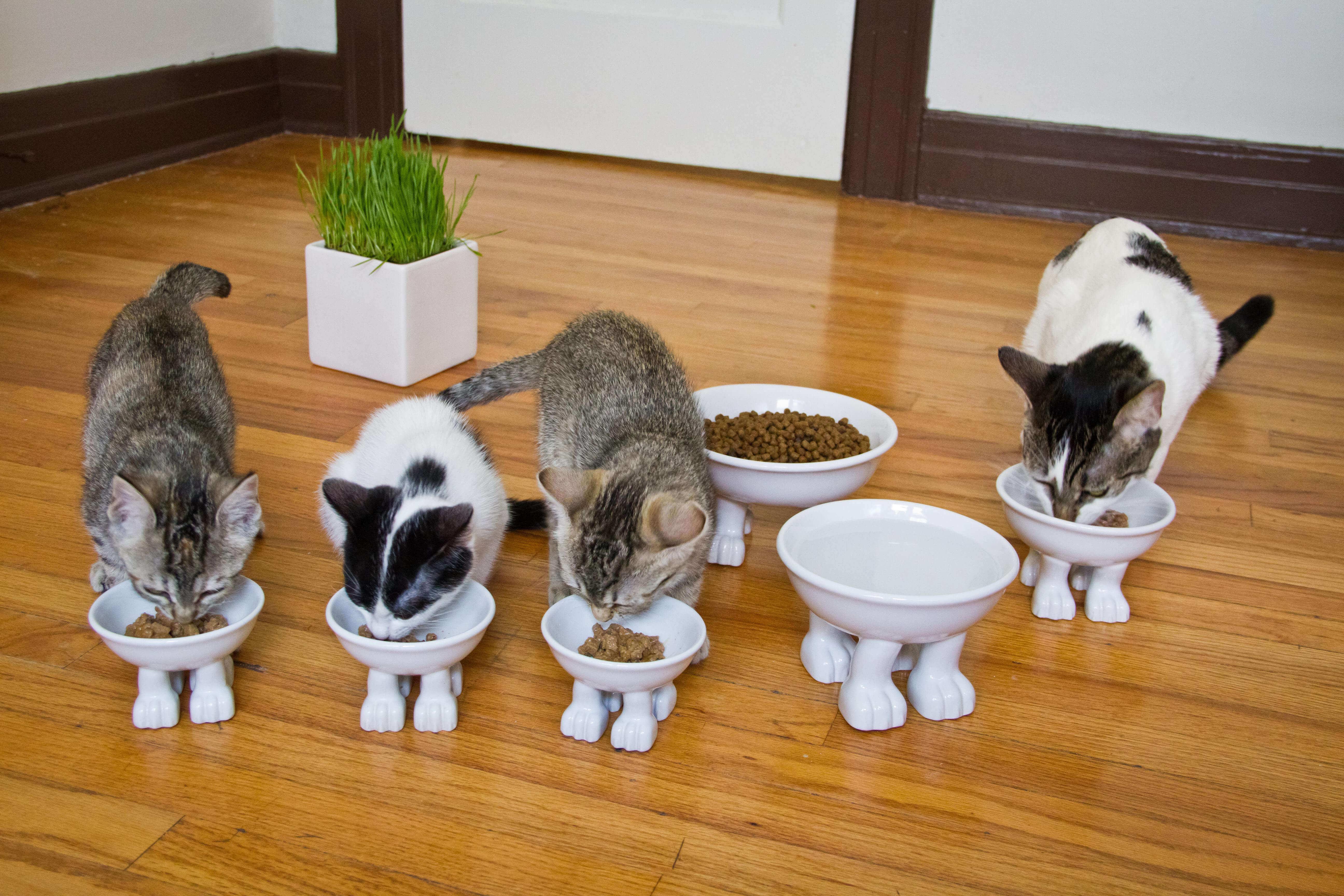 Kittens_allcatbowls